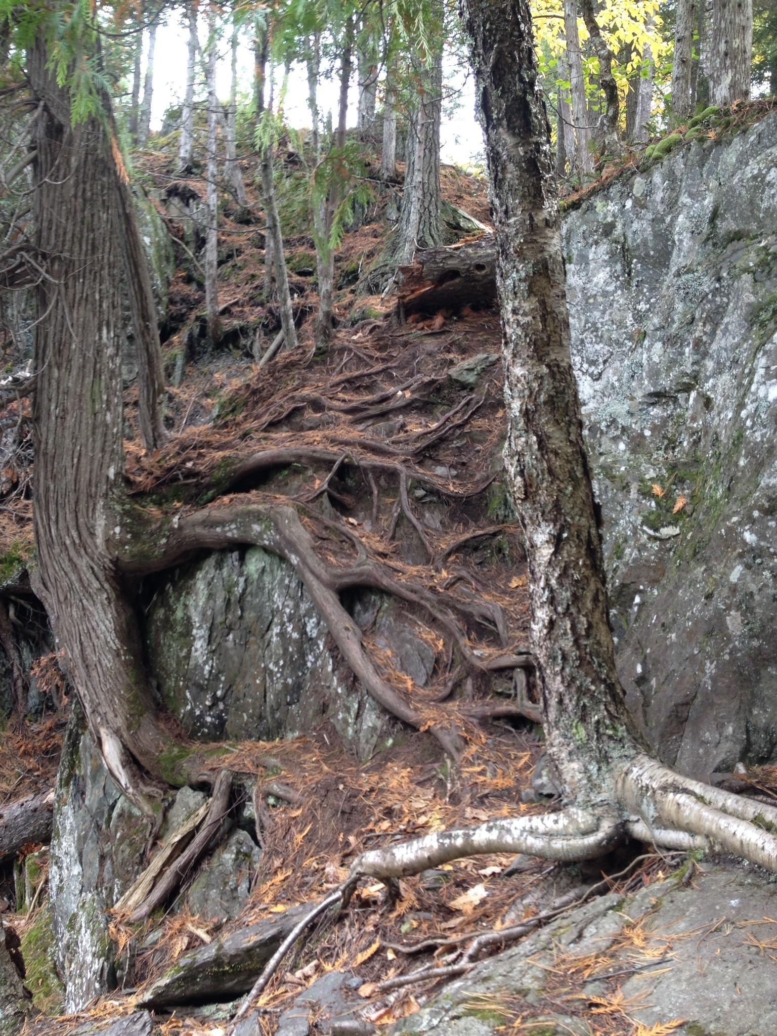 Dead River Falls Trail